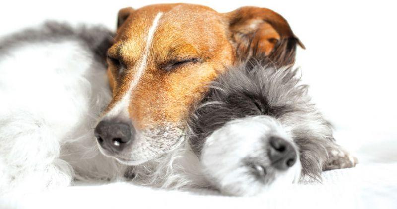 Entspannungstraining Hundetraining Tine Schröder